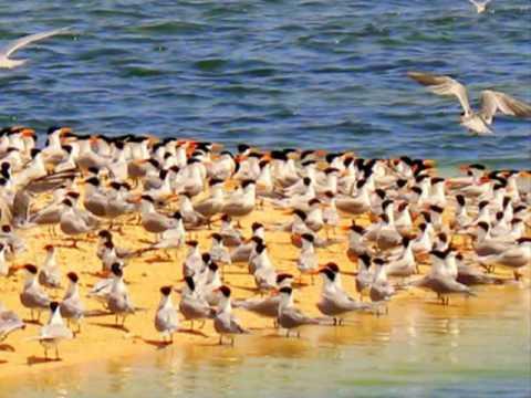 Eritrea Red Sea 2
