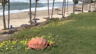 The Beachcomber Motel - San Clemente