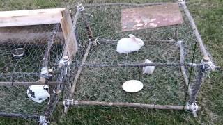 Rabbit Hutch Under $5