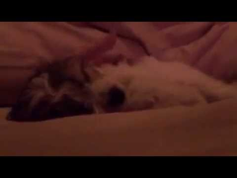 Puppy Time 5: Puppy scope 1 from Periscope