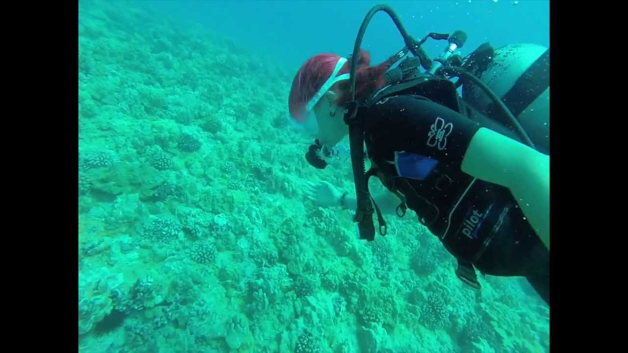 my scuba diving experience The discover scuba diving experience is the perfect program for those looking to try something new this year it is designed for those who have no experience with.