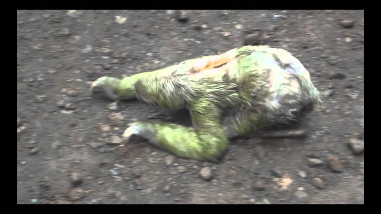 Mysterious Fuegian creature: Saapaim | Patagonian monsters