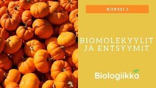 Elämän rakennuspalikat: Biomolekyylit ja entsyymit