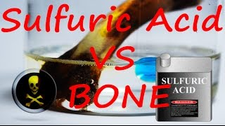 Sulfuric Acid VS Water Bead and Chicken Bone reaction.