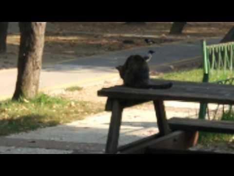 Kargaların Peșinde Olan Avcı Kedi