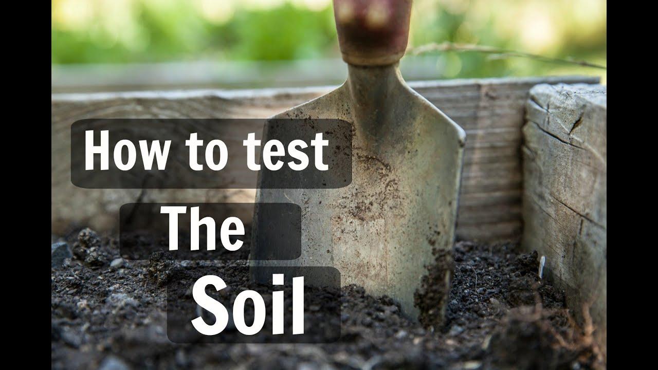 Organic lawn care tips. Soil testing - YouTube
