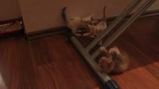 Ласковые и милые котятки в добрые руки