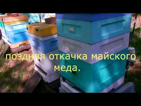 Вопрос: С каких цветов пчелы собирают майский мед в средней полосе?