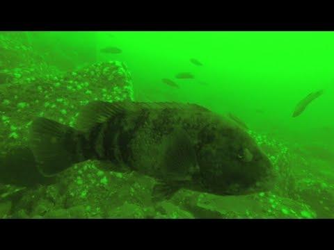 11 28 17 Ocean County NJ Reef And Wreck Fish