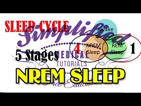 NREM SLEEP Simplified   Physiology