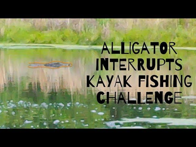 Alligator Interrupts Kayak Fishing Challenge | Lake Holcomb