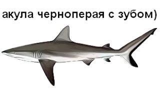 Російська Рибалка 3 Великий Бар'єрний Риф Акула Чорнопера з зубом)