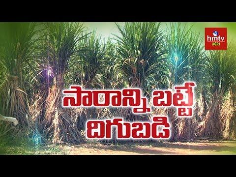 Progressive Farmer | Sugarcane Cultivation Without Chemical Fertilizers | hmtv Agri