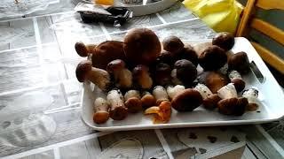 Поход за грибами Я и Финляндия