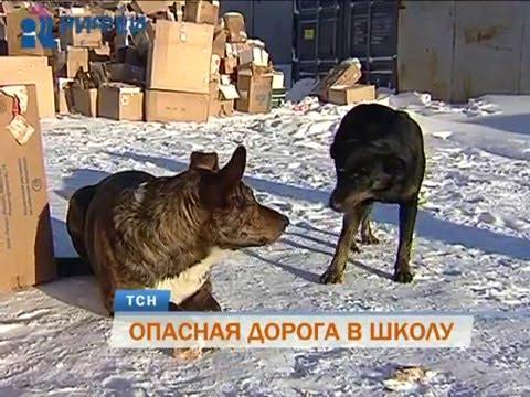 Вопрос: Стаи уличных собак нападают. Что делать?