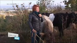 Á Marcilly-sur-Tille (21), où l'entretien de la pelouse calcaire se fait grâce au pastoralisme