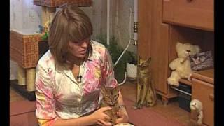 Абиссинская кошка Хеннесси / Abyssinian cat Hennessy(Абиссинская порода кошек с Еленой Шаровой., 2011-05-08T16:18:17.000Z)