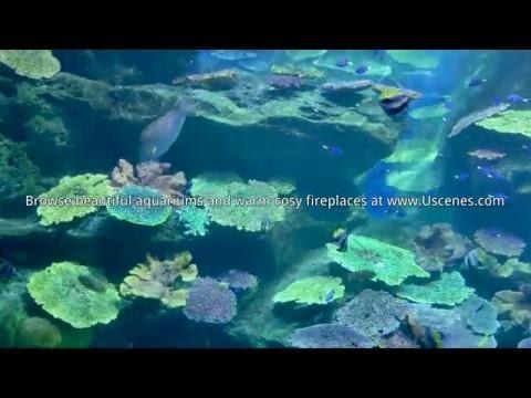 Finding Dorys Aquarium Video for Children 🐟🐠🐟