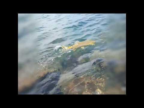 Sterkfontein Dam A World Class Dry Fly Fishing Venue Yellowfish