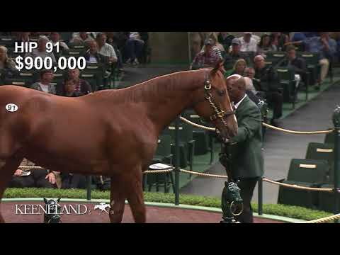 2018 Keeneland September Yearling Sale: Hip 91