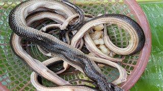 Cooking Snake With Secret Recipe - Catch & Cooking Snake - ASMR eating Snake - Village food factory