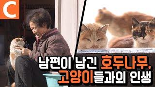 할머니와 호두나무, 할머니와 고양이들의 이야기