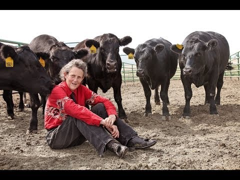 Temple Grandin on Visual Thinking and Animal Behavior
