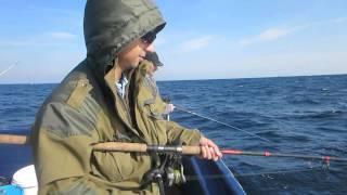 видео Образ жизни минтая и его ловля