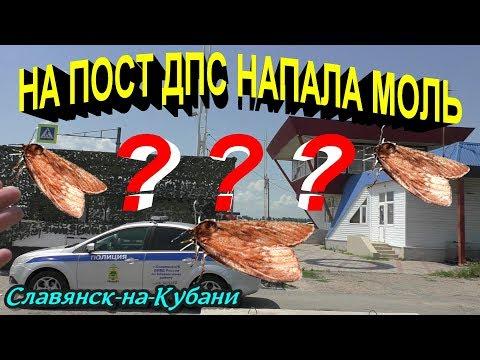 Славянск-на-Кубани🔥На пост ДПС напала МОЛЬ,поела флаги,обгадила туалет и испортила пожарный щит ?🔥