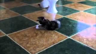 Frolicat DART Интерактивная игрушка лазер для кошек