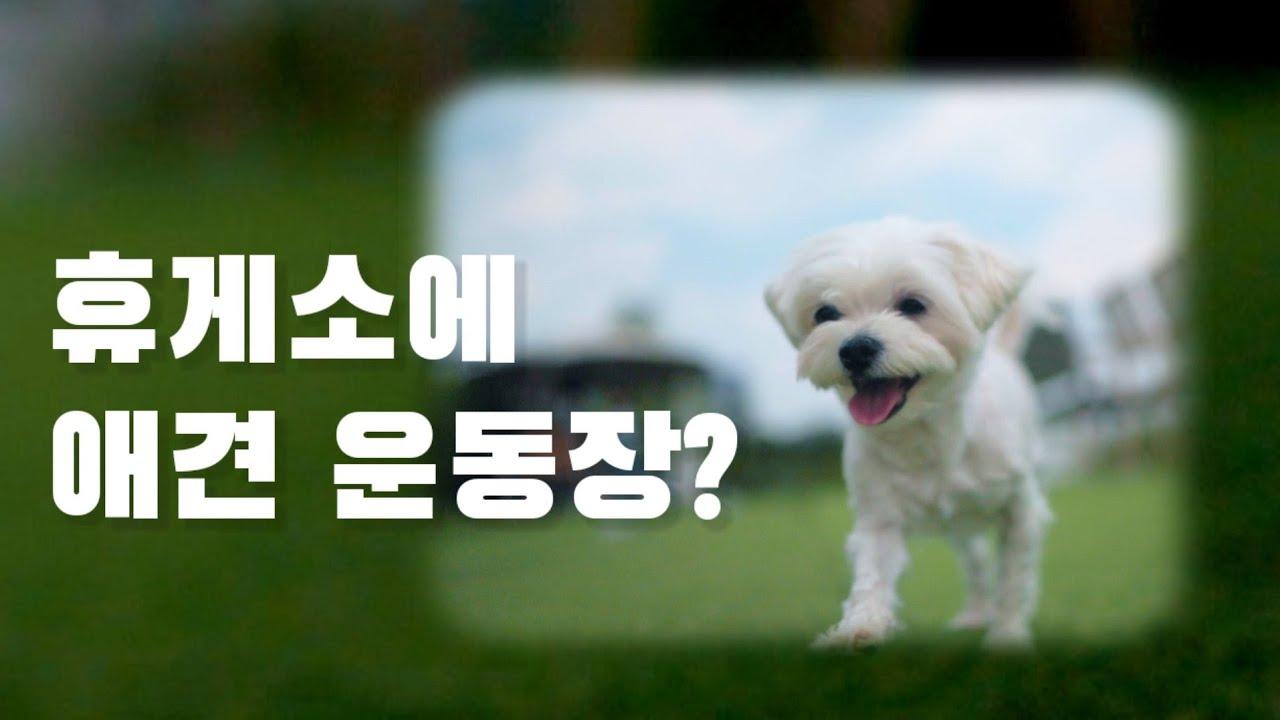 [MV]강아지 뮤직비디오 덕평 휴게소 안 애견카페 애견운동장 달려라 코코