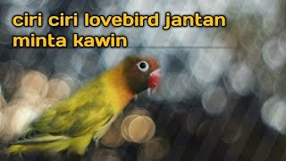 Download Lagu ciri lovebird jantan mp3