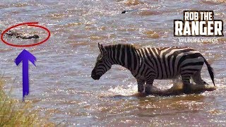 Lucky Zebras Cross Crocodile Infested River | Maasai Mara Migration