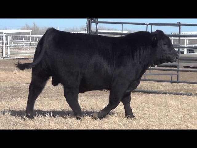Express Ranches Lot 8