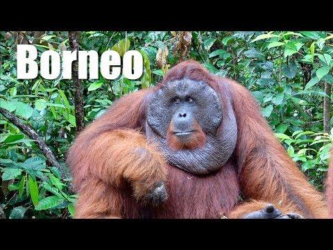 Into the heart of Borneo - En el corazón de Borneo en Indonesia