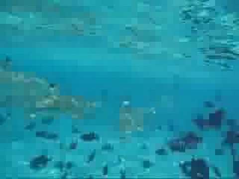 2008 (04) South Seas (Sharks 2) TATC