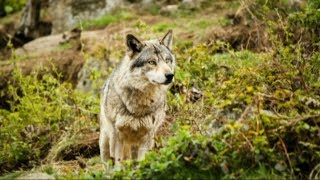 Правила  поведения в лесу: какие опасности подстерегают нас?