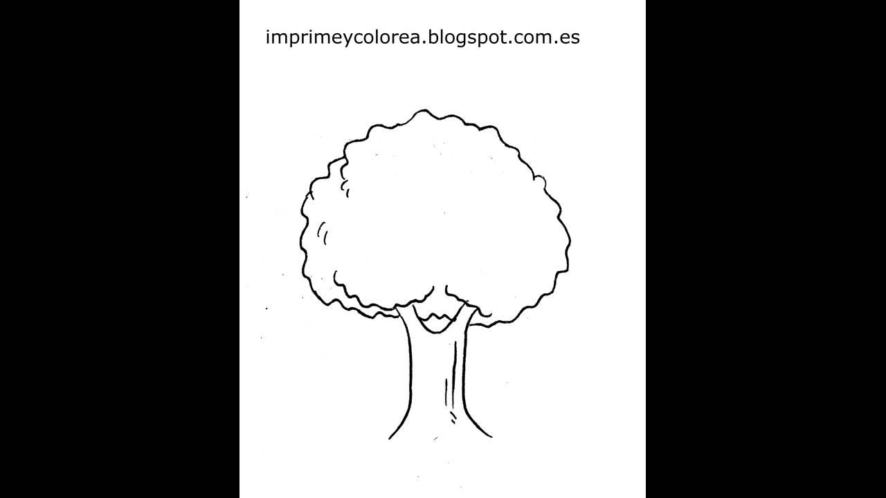 Dibujo De Un Arbol Para Imprimir Y Colorear Youtube