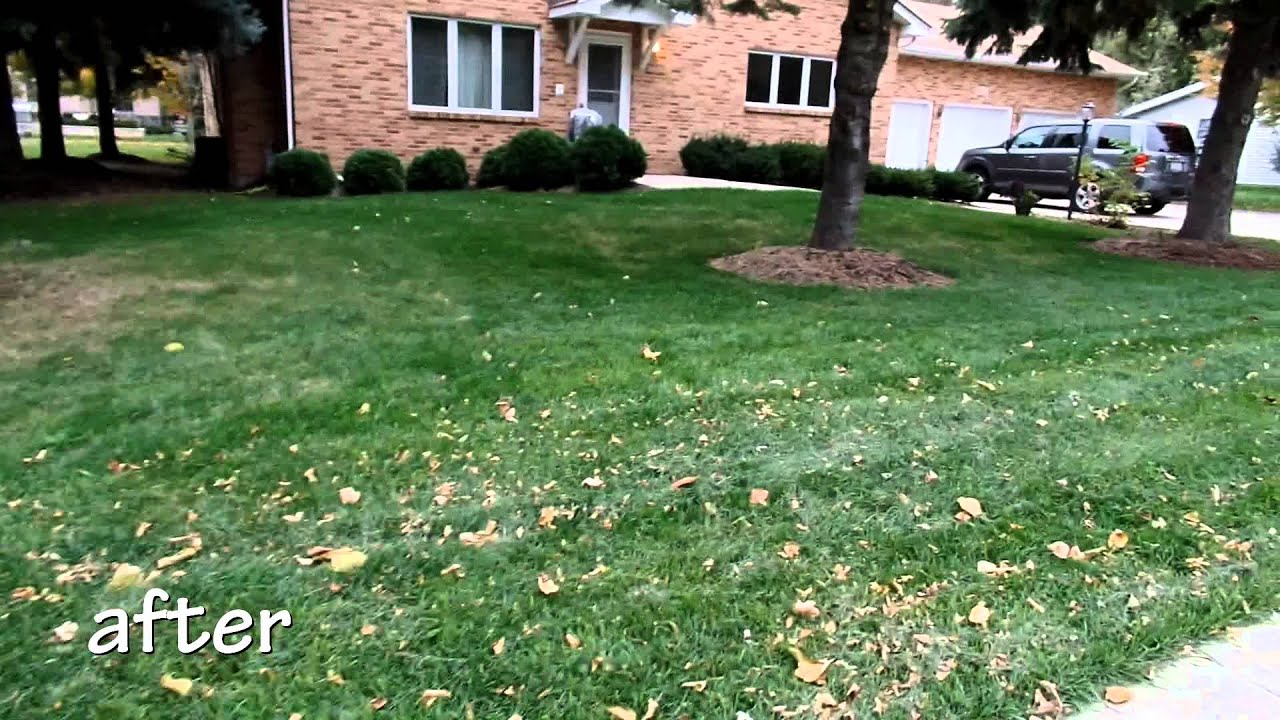 lawn treatment lawn rehab before and after - Lawn Treatment