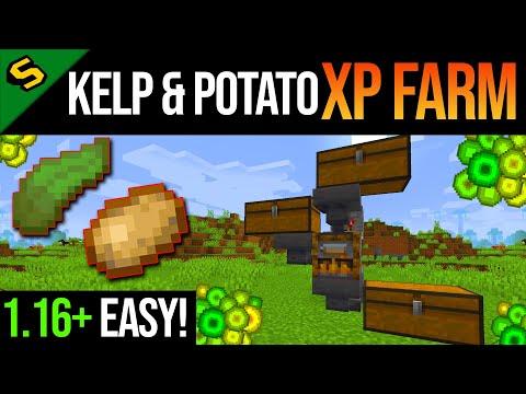 Minecraft EASY XP Farm Tutorial (Kelp U0026 Potato) JAVA U0026 BEDROCK 1.16+