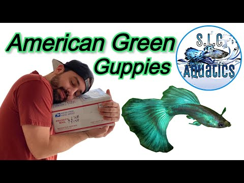 AMERICAN GREEN GUPPY - UNBOXING