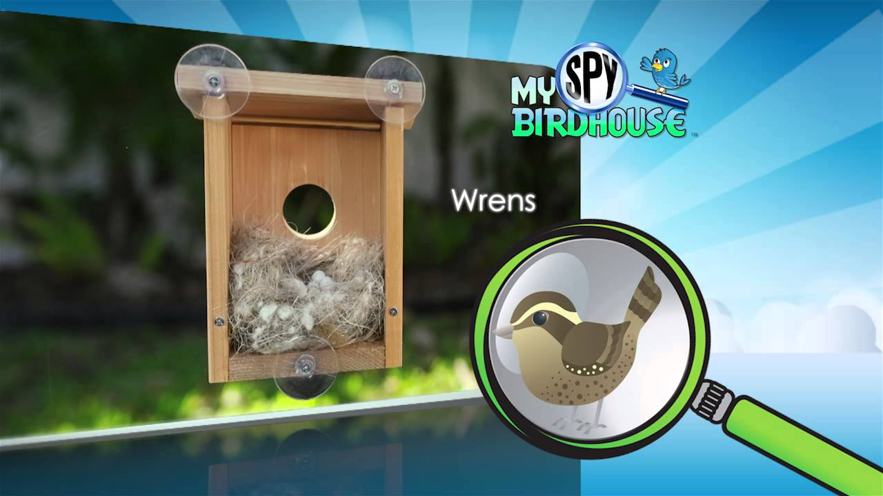 Window bird house - My Spy Birdhouse