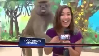 Babuíno passa a mão em repórter ao vivo!