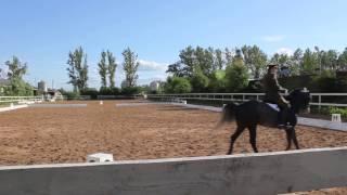 Конный спорт обучение. Кизимов М.И. Тренировочное видео. ППЮ.