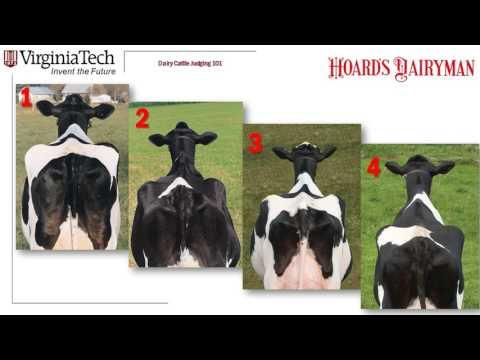 Dairy Judging 101 practice class: H1