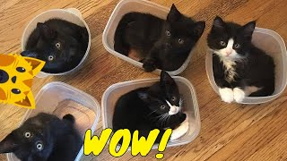 💖 Happy cat mom - Funny Cat Videos / Cute Cats And Kittens