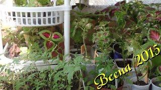 видео Комнатные цветы на балконе. Особенности выращивания