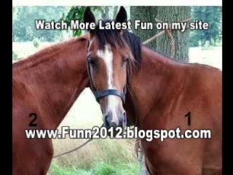 Most Watched Funny Animal Videos