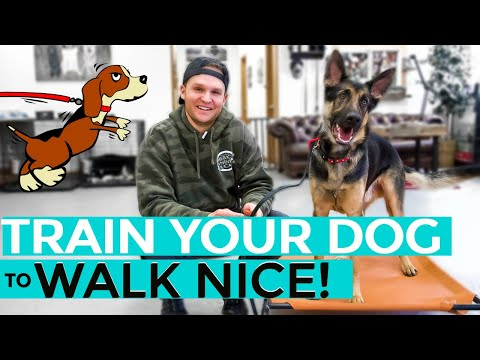how-to-leash-train-your-dog-not-to-pull-+-dog-training-loose-lead-walking