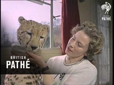 Mary Chipperfield - Animal Trainer  Aka Woman Animal Trainer (1964)